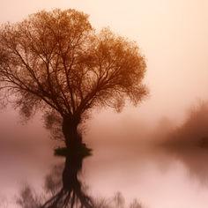 tree-3091981.jpg