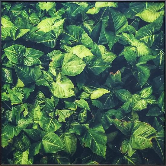 Impressão em vidro - Folha verde escuro