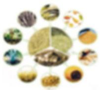 Pyrolyse lente de la biomasse