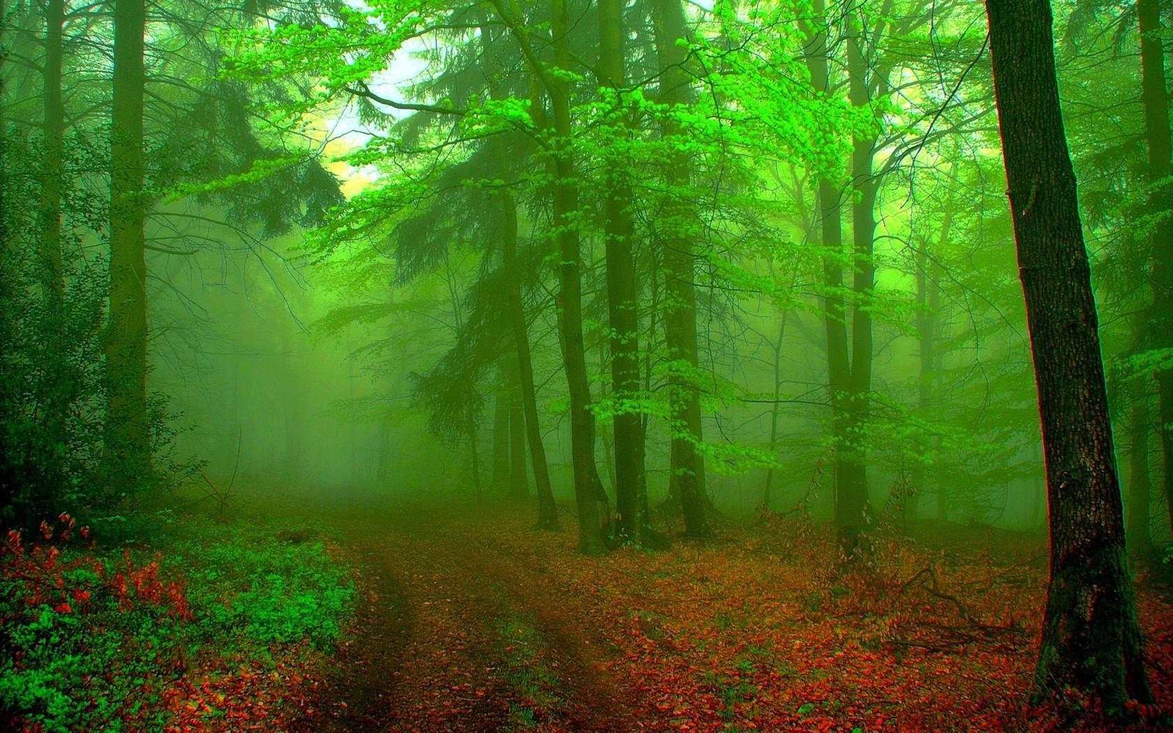 Protéger les forêts