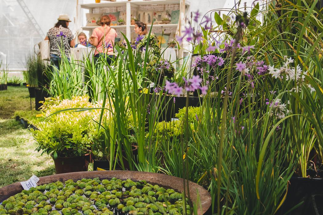 Feria Jardinera 2015