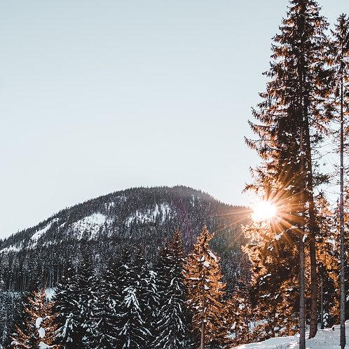 Schwarzwald Paket