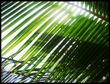palmeramorro copypick.jpg