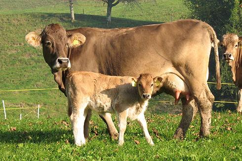 vendita carne bovina torino e provincia