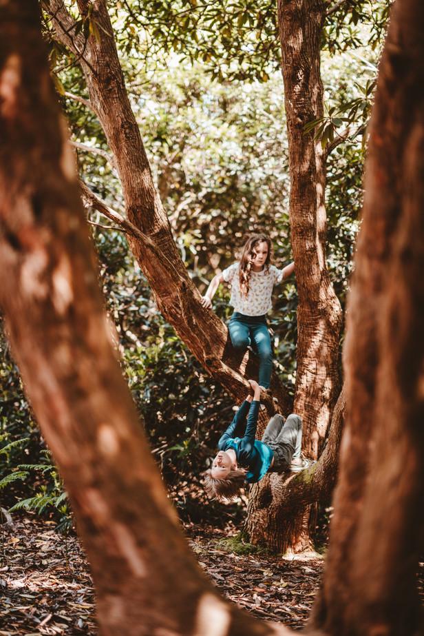 kids in trees.jpg