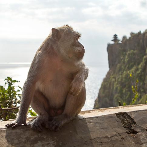Bukit Monkey