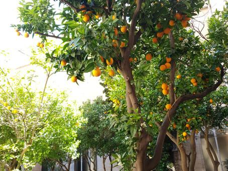 Valencia! City of paella and oranges