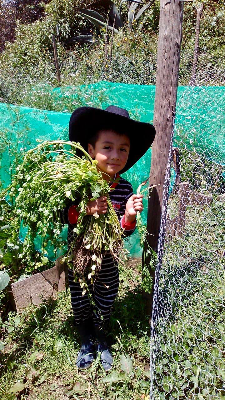 4.niño cilantro