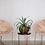Thumbnail: Silla lounge Cali Cobre y Piel