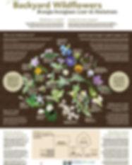 wildflower poster.JPG