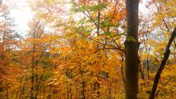 Venez vivre les couleurs d'automne