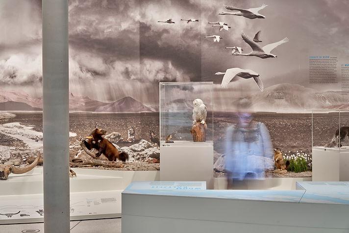 Eiszeit Naturkundemuseum Karlsruhe © Norbert Miguletz Fotografie