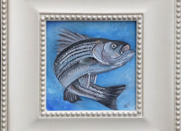 "6"" x 6"" oil painting framed - ""Striped Bass"""