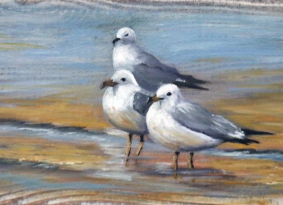 """Whitewashed Barnwood-""""Wading Gulls"""""""