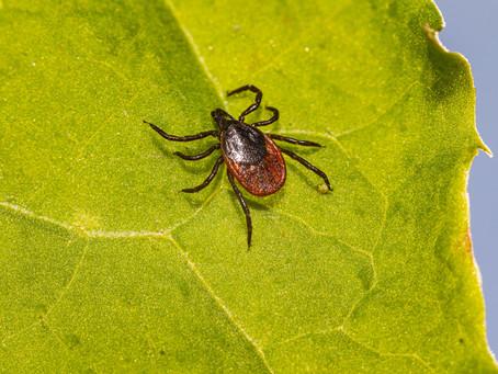 Borréliose de Lyme et naturopathie