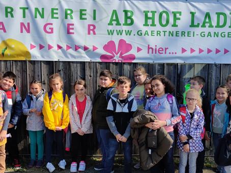 3b - Zu Besuch in der Gärtnerei Ganger
