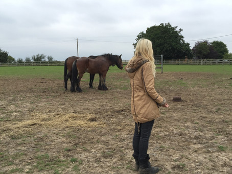 Working with distant reiki for animals