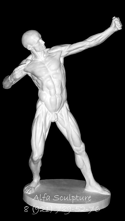 Лучник 75см (анатомическая фигура)