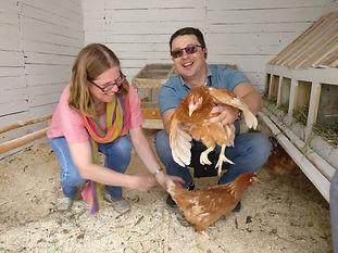 Первые курицы.jpg