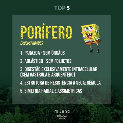 TOP-5---PORÍFERO.png