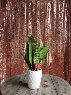 Bubbly 1 Photobooth Backdrop
