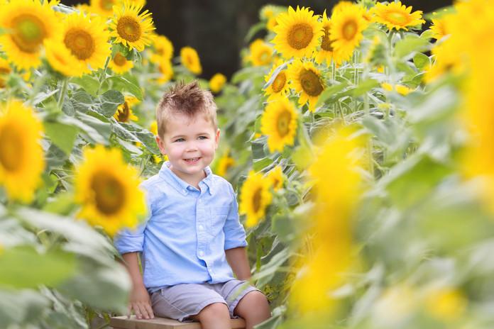 2017 Sunflower Brown-1049.jpg