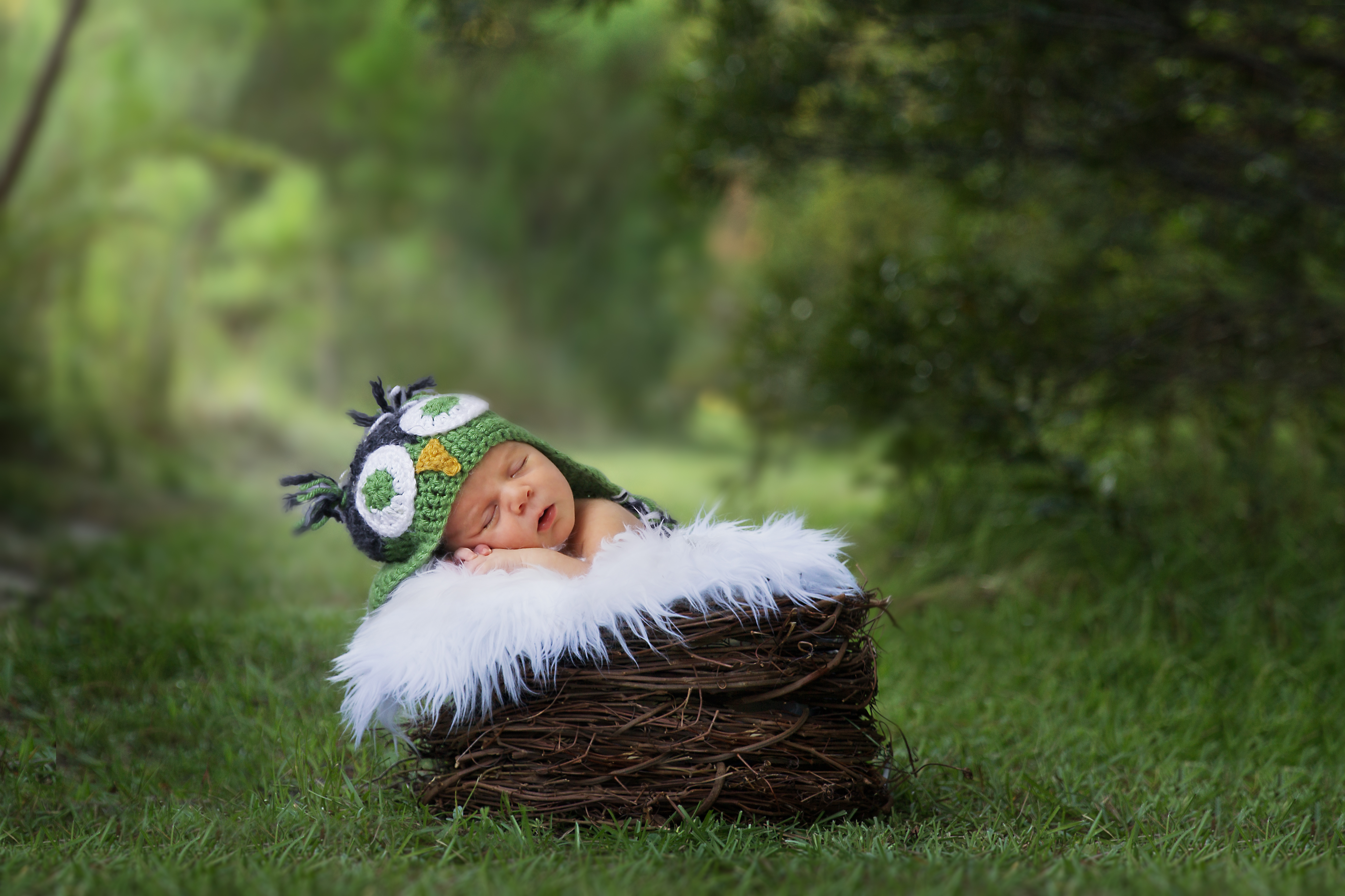 Outdoor Newborn Owl