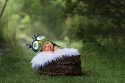Outdoor Newborn Owl