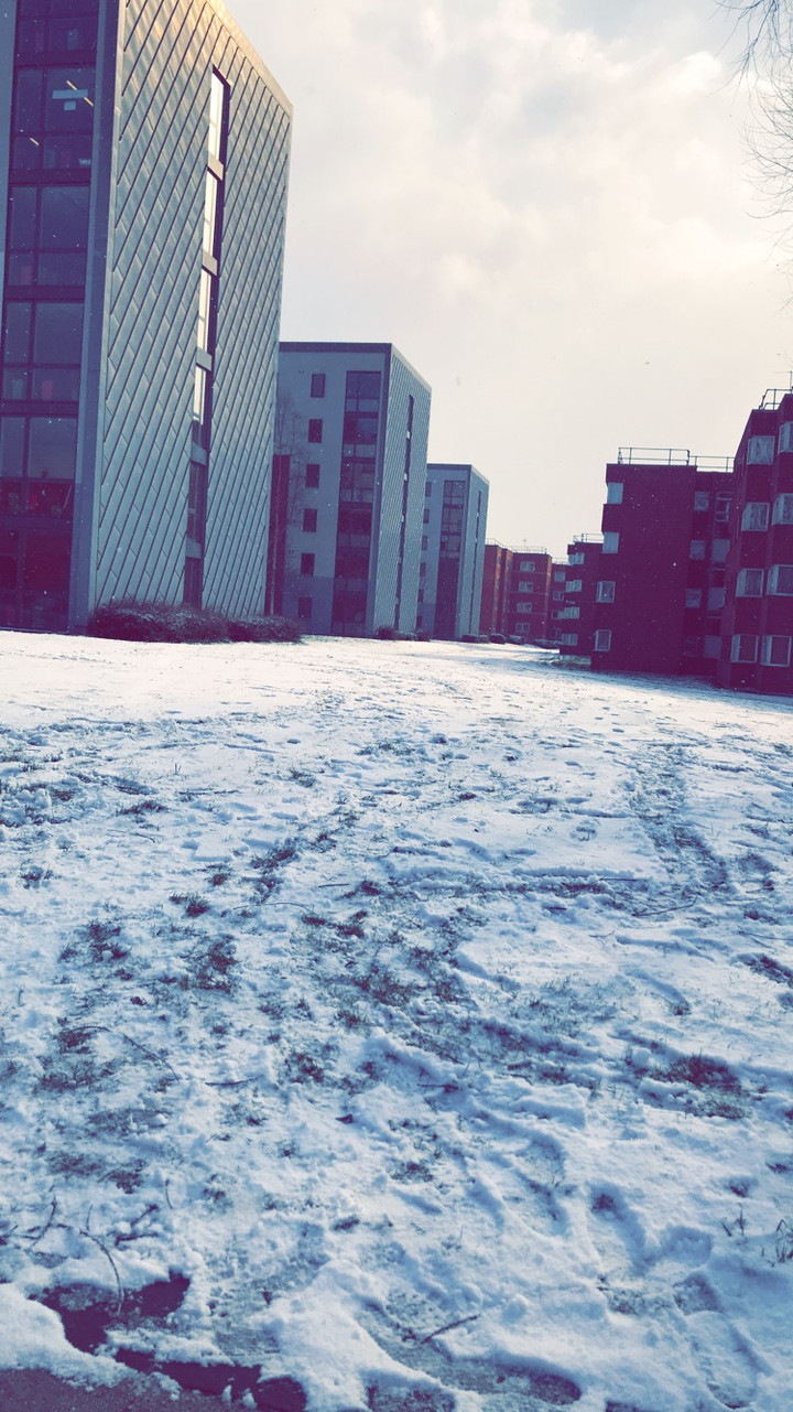 International students give a sunny welcome to the 'Beast from the East'