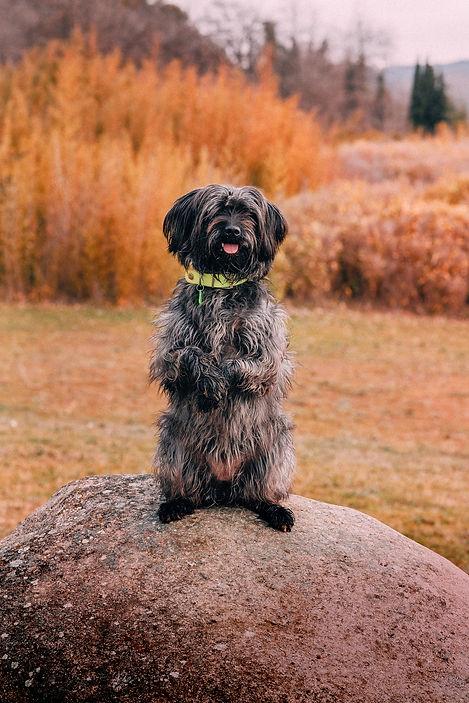 Portrait chien