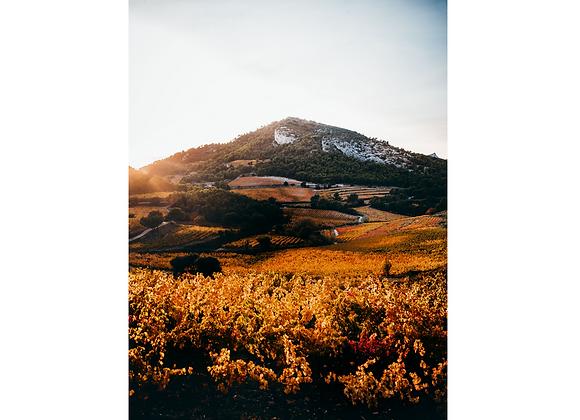 Le paradis des vignes