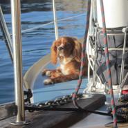 Mon chien sur le pont