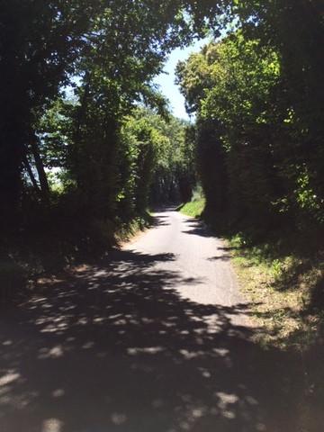 200701 PHOTO PLATEAU Chemin creux.jpg