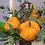Thumbnail: 0627 Ящик с цветами