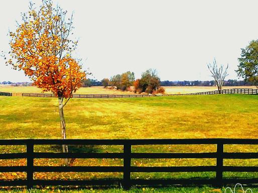 Clinics at Blue Moon Farm (Sheridan, IL)