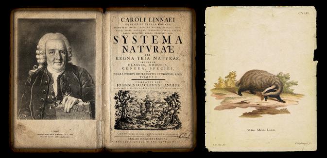 Systema naturae.png