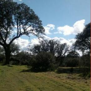 El PP de Boadilla rechaza proteger el monte de Boadilla