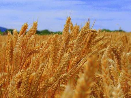 Contra el despilfarro de alimentos y el Objetivo Hambre Cero