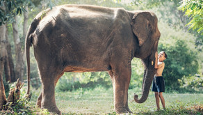 How to inspire Kids to protect Wildlife?