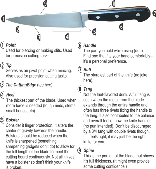 knife anatomy.png