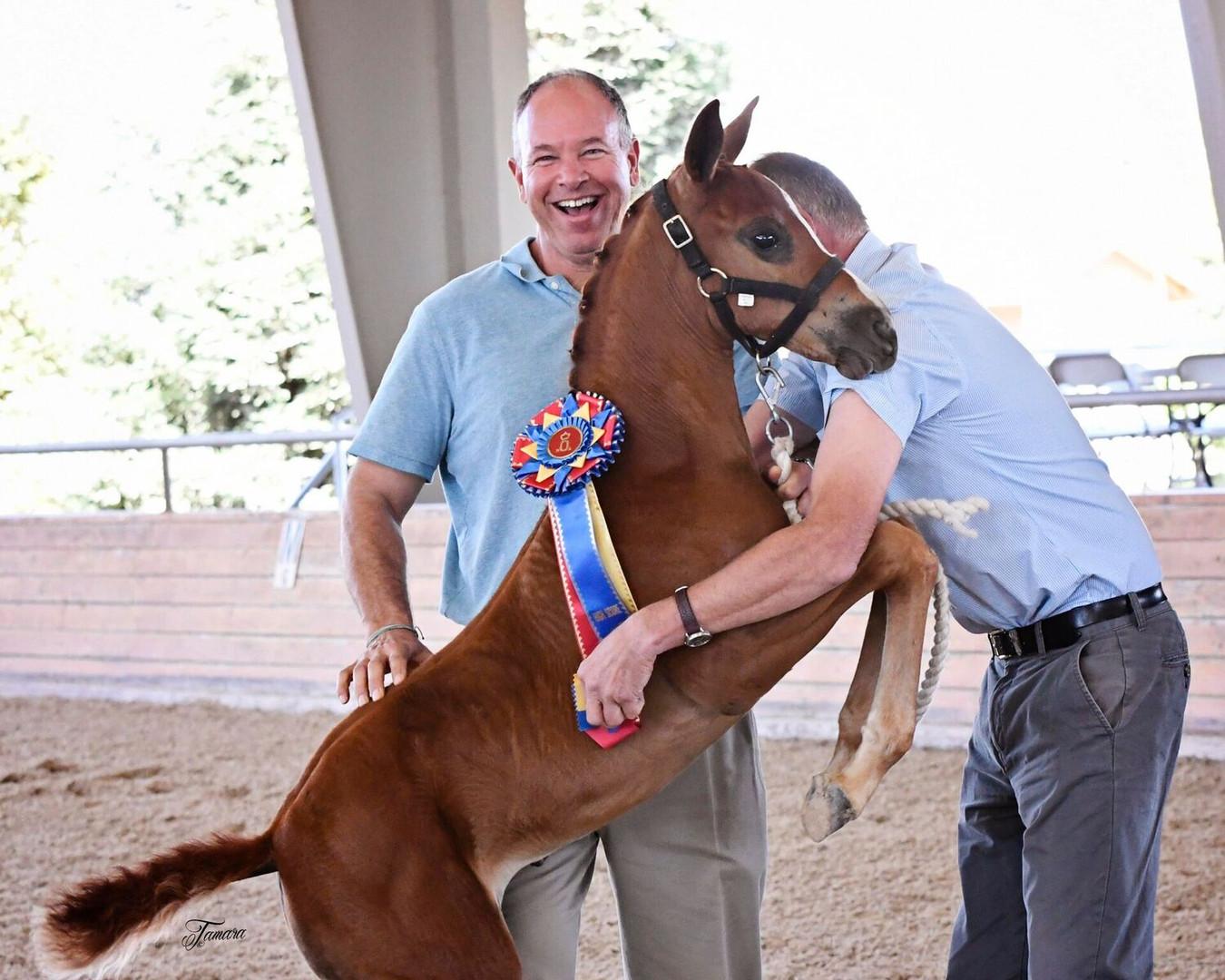 Champion Foal 2016 Rubignon Filly