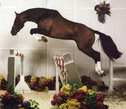 landkonigfree jump