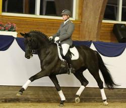 Dubarry Under Saddle