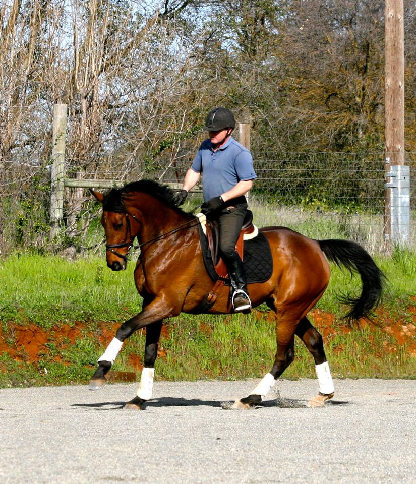 Apt to Please Dressage Canter