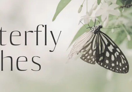 Butterfly Wishes