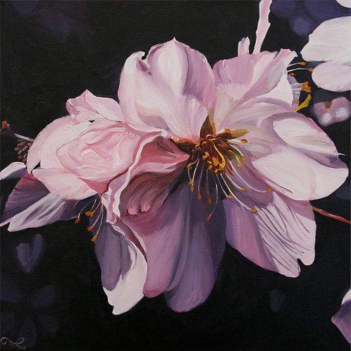 """Marie Cameron - Cherry Blossom Demure, 12x12"""""""
