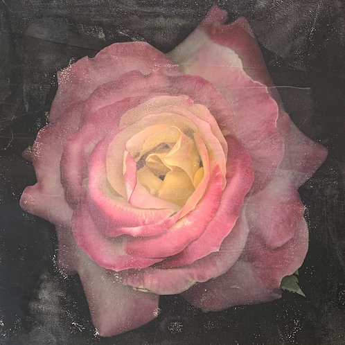 Jay Ruland - Watercolor Rose 16x16""