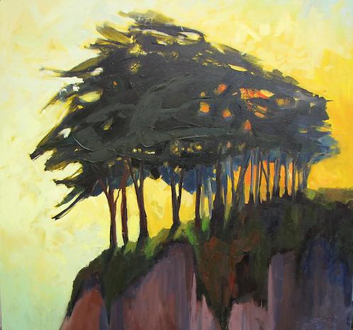 Barbara Lawrence - Cypress Tree in the Sun