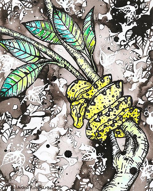 Lauren Ringelman - Cloud Forest Snake 2 Green Tree Python Hatchling