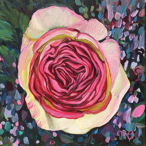 """Marie Cameron - Eden Rose VI 6x6"""""""